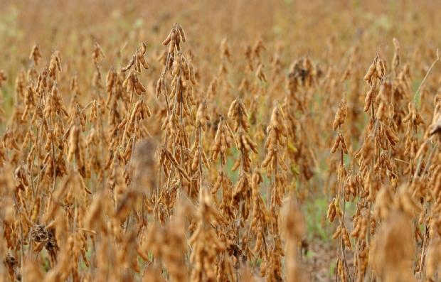 Idea autoriza plantio excepcional de soja fora do calendário oficial